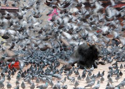 ruly photos ici et ailleurs - Nepal